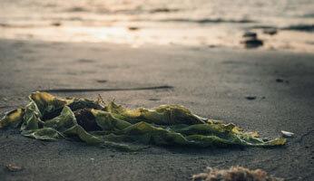 Les bienfaits des algues marines en cosmétique