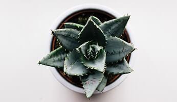 Comment utiliser le Gel d'Aloe Vera cet été ?