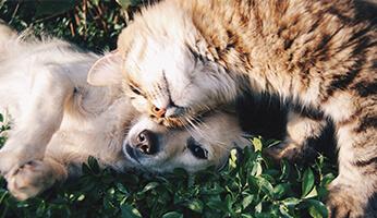 Comment garder sa maison propre avec un animal de compagnie ?